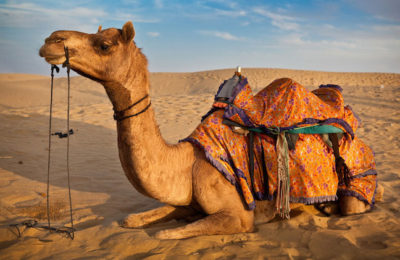 rajasthan luxury holiday packages