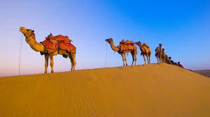 rajasthan luxury tours