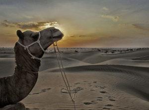 holiday in jaisalmer rajasthan