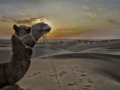 holiday in jaisalmer rajasthan
