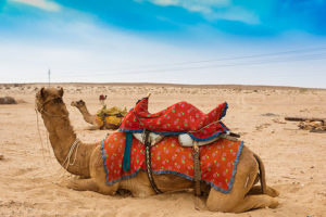 travel-to-rajasthan