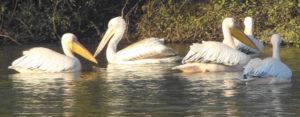Bharatpur-Bird-Sanctuary tour packages