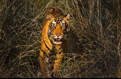 Ranthambore Tiger Reserve tours
