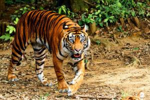 Sariska-Tiger-Reserve packages