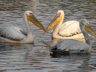 bharatpur-bird-century holiday travel