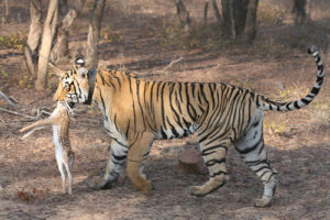ranthambore tiger tour packages